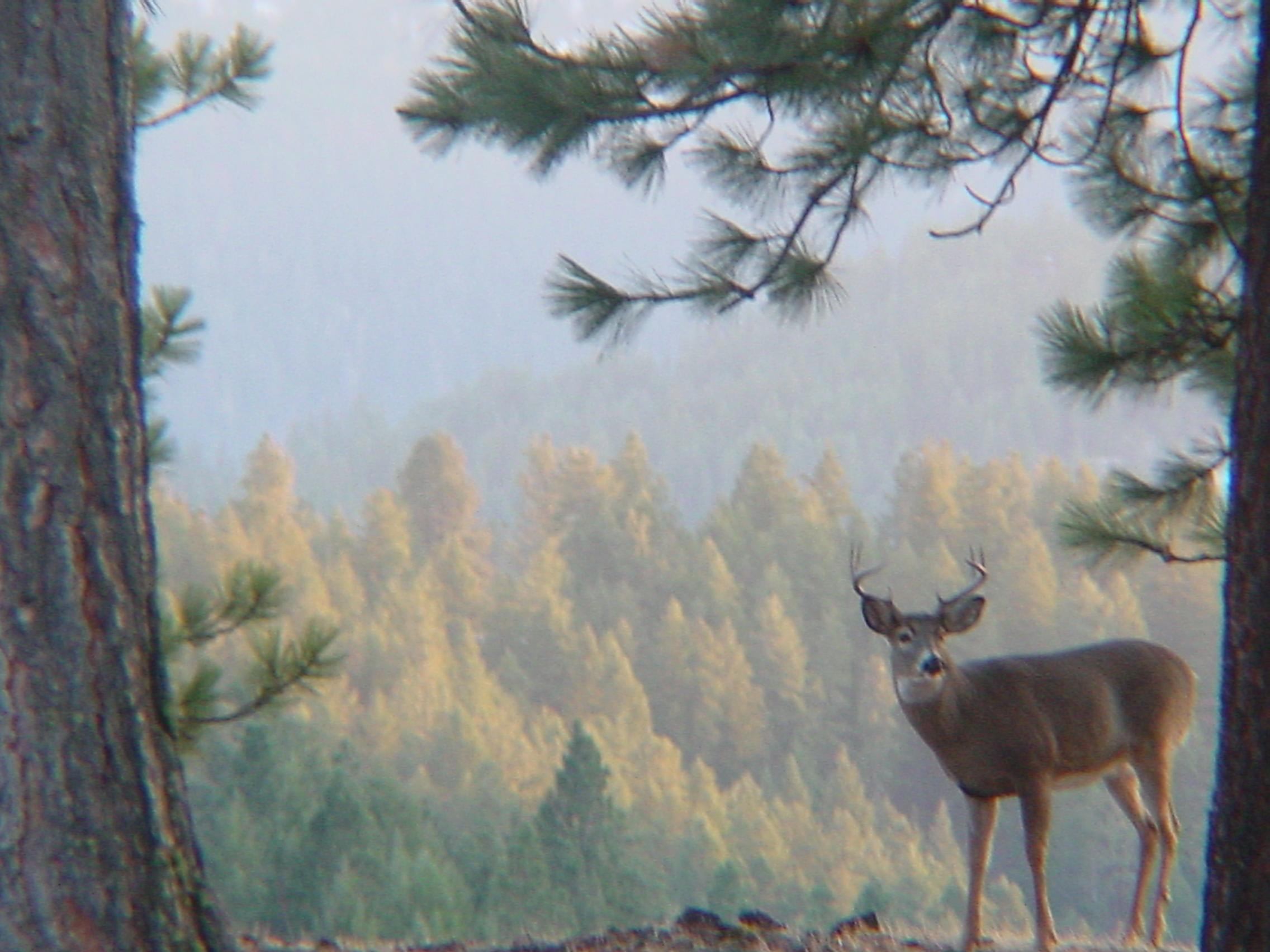 Autumn Bucks
