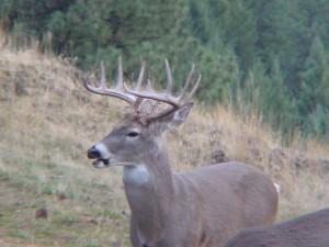 buck_003